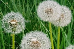 Calendario pollinico e aerobiologia