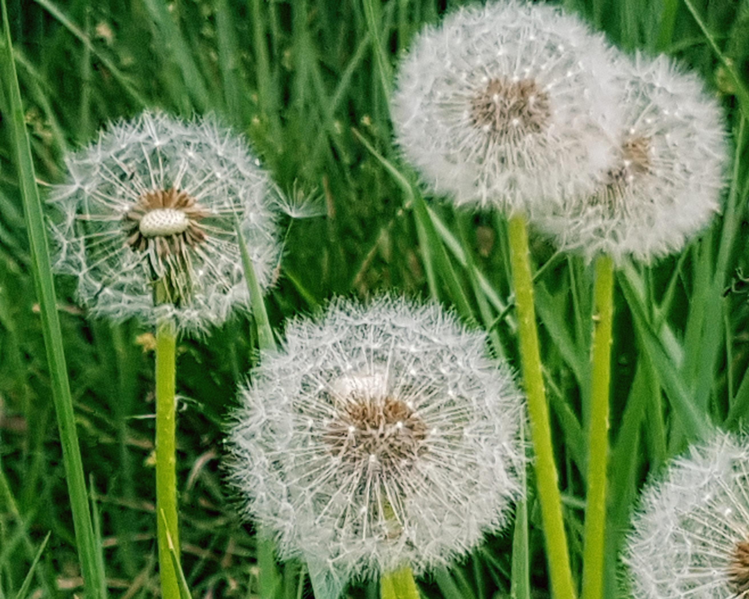 Calendario Pollini Allergie.Allergie Consulta Il Calendario Pollinico Asst Valle Olona